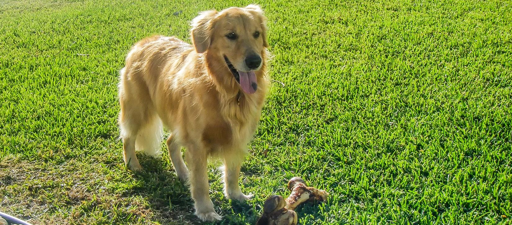 dog-yard