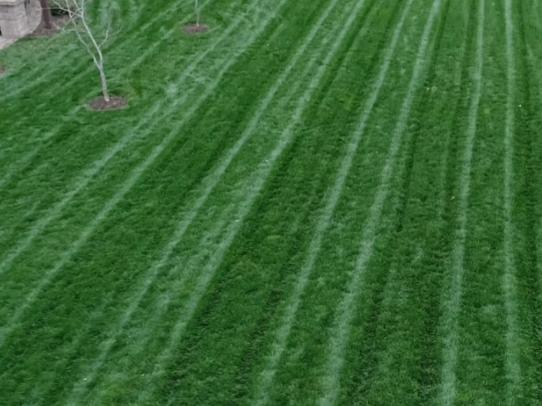 Fine fescues lawn